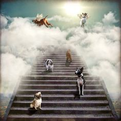 All Dogs Go To Heaven...because if they are not there, then for me, it is not Heaven.