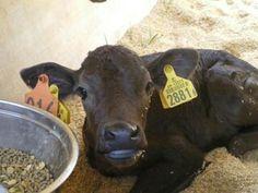 牛乳のウソ&ホントの画像 | ひふみ塾 世回りブログ