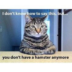 For all whose kiddos have hamsters you love to hate..LOL!!