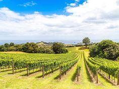 Waiheke Island Food and Wine Tasting Tour from Auckland Waiheke Island Essen und Weinprobe ab Auckland – Auckland, Neuseeland Auckland, Best Places To Travel, Places To Visit, Top 10 Destinations, Waiheke Island, Natural Wonders, Hotels And Resorts, Luxury Travel, New Zealand