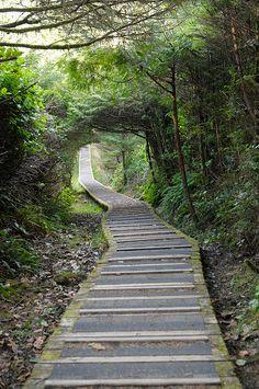 Rainforest Trail in Tofino, British Columbia, Canada