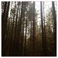 Kilbroney forest feb 2013