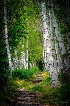 The Jesup Path (Acadia National Park, Maine) by Ken Rowland