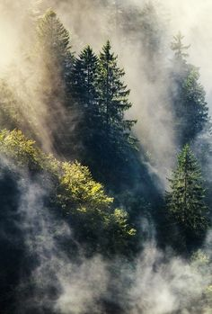 Misty forest morn.....