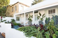 Sydney garden design, garden maintenance and horticultural services company Bungalow Landscaping, Outdoor Style, Home Landscaping, Home Porch, Rendered Houses, Front Garden Design, Front Yard, Australian Homes, Birds Of Paradise Plant