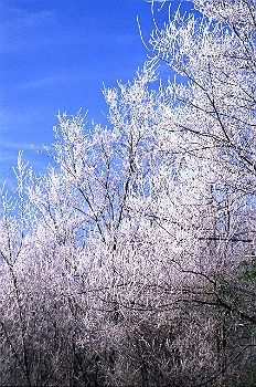 Yellow River State Forest in winter | Iowa DNR