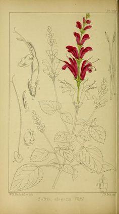 v.4 - Refugium botanicum : - Biodiversity Heritage Library