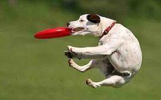 Anche i cani giocano a freesby E chi lo dice che i cani non possono giocare a freesby? Anche i nostri amici pelosetti impazziscono per il disco e sono anche molto bravi. Domenica a Torino si è tenuta una tappa del campionato di Di #freesby #cani #discdog #torino