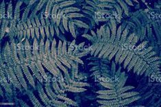 Blechnum Discolor or Piupiu Fern Fronds in a Minimalist Monochrome Style Nature Background of Native New Zealand Blechnum Discolor also known as a Crown Fern or by it's maori name Piupiu Fern Fronds in a Minimalist Monochrome or Duotone Look for a Modern Style. Abstract Stock Photo What Image, Image Now, Photo Composition, Monochrome Fashion, Abstract Images, Photo Illustration, Fern, Royalty Free Images, New Zealand