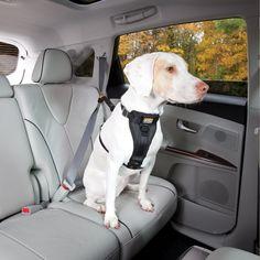 Safe Dog Travel with Bergan Pet\'s Dog Auto Harness | Dog travel, Pet ...