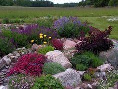 jardin de rocaille avec grandes pierres et plantes en couleurs vives