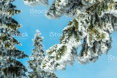 Snowy branches with blue sky Lizenzfreies stock-foto