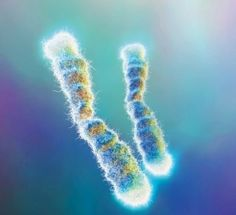 """Researchers have discovered a switch that helps control the growth of telomeres — the timekeepers of our cells. Flipping the switch could turn off aging cells and encourage healthy ones to keep generating later in life. The study was published … Continue reading  Free eBook """"Top Ten Anti Aging Supplements + How to Slow Down the Aging Process""""   visit www.antiaginginsights.com→"""