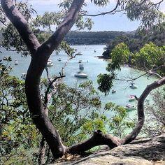 Manly to Spit Bridge Scenic walk. Tasmania Australia, Sydney Australia, Australia Travel, Western Australia, Cairns, Newcastle, Melbourne, Sydney Skyline, Sydney Beaches