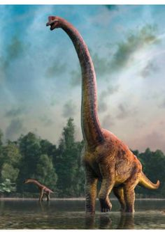 Illustration of a giraffatitan dinosaur mother and infant. Giraffatitan was previously thought to be a species of brachiosaurus (B. brancai) but is now thought to belong to a separate genus. Dinosaur Photo, Dinosaur Images, Dinosaur Pictures, Prehistoric Wildlife, Prehistoric World, Prehistoric Creatures, Dinosaur Fossils, Dinosaur Art, Dinosaur Crafts