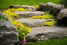 Stone steps with plantings