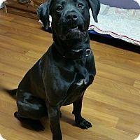 Adopt A Pet :: McGregor - Lisbon, OH