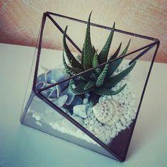 UniqueGlassFlorariums, геометрические флорариумы
