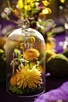susan stripling photography. yellow dahlia under a glass cloche