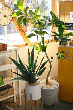 植物の高低差のバランスをとるために、鉢のスタンドを使うのも有効な手段。