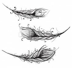 feathers - tattoo??                                                                                                                                                                                 More