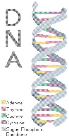 DNA Strand Cross Stitch Pattern PDF by robinsdesign on Etsy