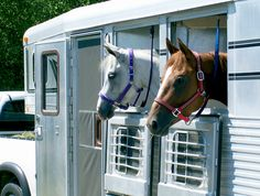 Winter Weather Challenges for Horse Travelers