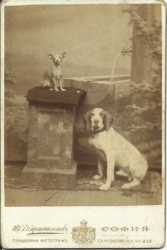 "c.1880s cabinet card of a pointer/hound sitting next to a little terrier perched up on a ""stone"" plinth in front of photographer's painted, rustic backdrop. From bendale collection"