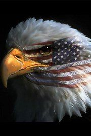 Patriotic Eagles Wallpaper Patriotic Eagle With Flag Clipart Patriotic Eagle USA Patriotic Eagle Tattoos Patriotic Eagle Pictur. I Love America, God Bless America, Hello America, America America, Le Husky, Eagle Pictures, Patriotic Pictures, Eagle Images, Military Pictures