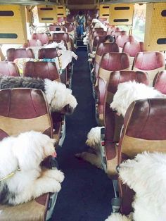 A busload of sheepies, send them to my house please.
