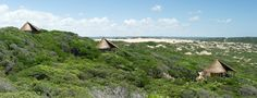 Luxury dome tents | glamping in Mozambique #africa #nature #experience #unique