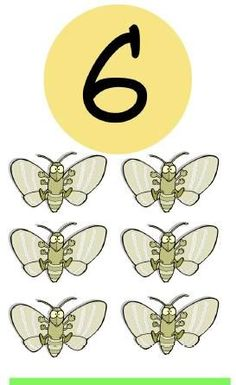 * Insecten! 6-10
