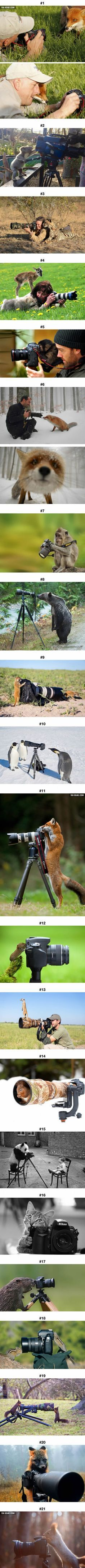 Animals that want to become wildlife/nature photographers, and they look adorable when doing it alongside humans.