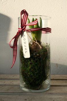 bulbs - freesia, paperwhites, amaryllis