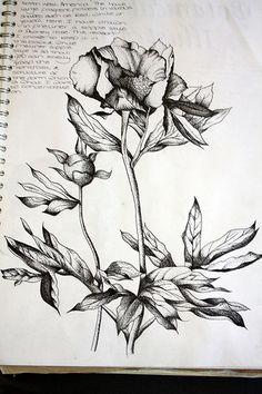 Art- Personal Investigation, Unit 3 (Natural Forms) – A Level Art Sketchbook - Water Natural Form Artists, Natural Forms Gcse, A Level Art Sketchbook, Sketchbook Ideas, Decay Art, Art Alevel, Observational Drawing, Nature Artists, Nature Drawing