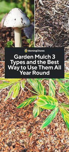 65 Best Garden mulch  images in 2019 | Garden mulch, Landscaping