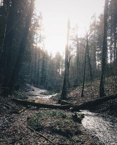 89/365 i love the sun. . . . #sunlight #nature #forest #picoftheday #exploretocreate #explore #photography #outside #hike #switzerland #spring #weather #loveit #warm #vscocam #vsco #vscogrid #365project #365daychallenge #enjoy #river #moment #feeling #happiness #freepeople by c.eli.ne