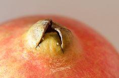 Pommegranede