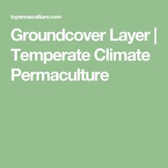 Groundcover Layer   Temperate Climate Permaculture