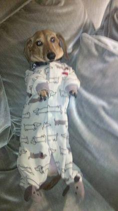 Weiner dog in a weiner dog sleeper, haha