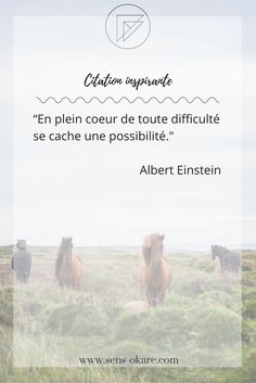 QuotesViral, Number One Source For daily Quotes. Leading Quotes Magazine & Database, Featuring best quotes from around the world. Positive Attitude, Positive Life, Jolie Phrase, Miracle Morning, Family Quotes, Me Quotes, Albert Einstein Quotes, Albert Camus, French Quotes