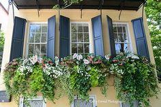 best summer flowers on balcony – Vyhľadávanie Google Winter Window Boxes, Window Box Plants, Window Box Flowers, Window Planters, Fall Flower Boxes, Hanging Window Boxes, Wooden Window Boxes, Fachada Colonial, Fresco