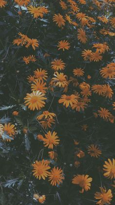 Most Beautiful Fall Wallpapers for iPhone XS Iphone Wallpaper Herbst, Sunflower Iphone Wallpaper, Fall Wallpaper, Cute Wallpaper Backgrounds, Pretty Wallpapers, Tumblr Wallpaper, Nature Wallpaper, Aesthetic Pastel Wallpaper, Aesthetic Backgrounds