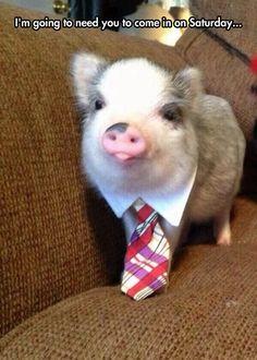 This little piggy went to work...LOL!!! -Jenny jokes ;-P
