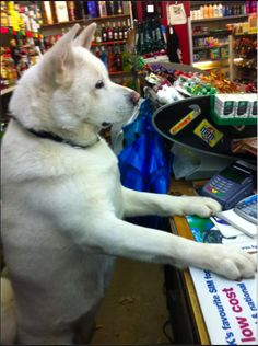 """""""I literally have no idea what you mean by 'cash'."""" 