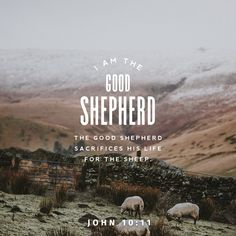 """John """"I am the Good Shepherd. The Good Shepherd puts the sheep before himself, sacrifices himself if necessary. A hired man is not a real shepherd. The sheep mean nothing to him. Parables Of Jesus, La Sainte Bible, Youversion Bible, New American Standard Bible, Amplified Bible, The Good Shepherd, New Living Translation, Daily Bible, Daily Word"""