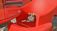Selbst unsere Katze fühlt sich auf unseren Gartenmöbeln wohl.