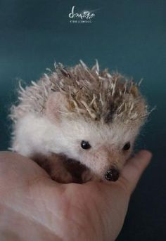Needle Felted - Hedgehog 10 cm long size by dollmofee creations. $250.00, via Etsy. by bernice