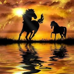 Diamond Painting Kits Full Drill, DIY Rhinestone Embroidery Cross Stitch Arts Craft for Home Wall Decor Two Horses (Horse W, Horse Pictures, Nature Pictures, Beautiful Pictures, Silhouette Painting, Horse Silhouette, Most Beautiful Horses, Animals Beautiful, Afrique Art, Horse Drawings