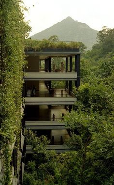 Designed by Sri Lanka's best-known architect, Geoffrey Bawa, the Kandalama hotel was built as an environmental hotel. The jungle outside is free to climb the walls of the hotel, and in the rooms the life of the jungle is literally at the fingertips.